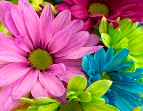 tl_files/motive/Happiness-Blumen.jpg